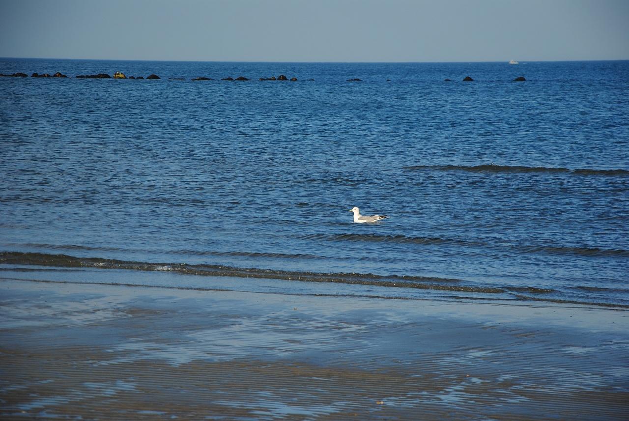 Sea and freedom - Casalborsetti - Porto Corsini