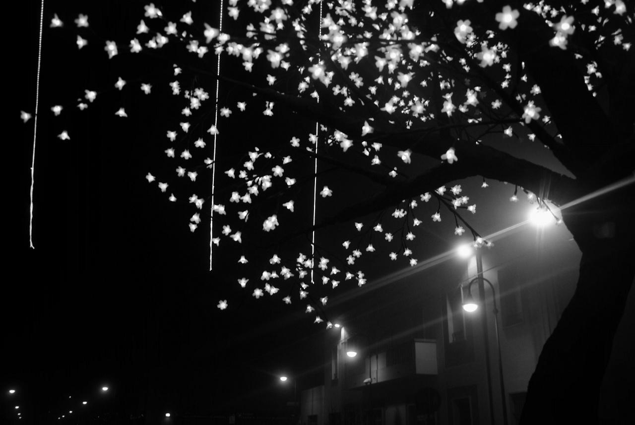 Noël en blanche et noir